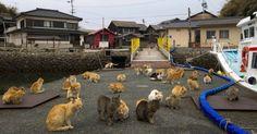 """Gatos deitam no meio de rua da ilha de Aoshima, na província de Ehime, no sul do Japão. Mais de 120 felinos habitam o pequeno território, enquanto apenas 22 pessoas moram no local. A ilha é conhecida como """"ilha dos gatos"""".   Fotografia: Thomas Peter/Reuters."""