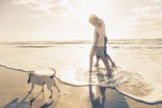 Strandurlaub Holland: Jetzt könnt ihr 3 Tage mit euren Hunden an der holländischen Küste im tollen 3 Sterne Hotel für nur 80€ verbringen