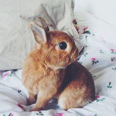 bunnies! always
