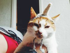 The Unicorn  Cat Hat by arandomknit on Etsy