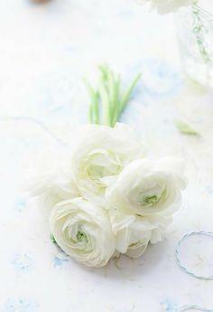 Fresh White Ranunculus and Roses Love Flowers, My Flower, White Flowers, Flower Power, Spring Flowers, Ranunculus Flowers, White Ranunculus, Beautiful Flowers Wallpapers, Beautiful Roses
