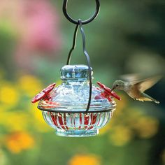 Bird Feeders attract backyard birds to your garden. Try a window-mounted bird feeder or hummingbird feeder. Or choose a metal bird feeder or wooden bird feeder. Metal Bird Feeders, Humming Bird Feeders, Hummingbird Nectar, Hummingbird Food, Hummingbird Garden, Cottage Style Furniture, Pots, Charleston Gardens, White Flower Farm
