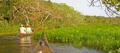 #KhosiBayForest - This 11000 ha tropical paradise of crystal-clear blue water is home to marshland, raffia, wild date and palm, mangrove swamp and sycamore fig forest. Providing a home for around 250 species of bird, among them the fish eagle , palmnut vulture, whitebacked heron, the night heron and purple and reed kingfisher. Small animals such as Bushbuck, duiker and monkey inhabit the forested parts + sightings of hippopo and crocodile as they bask in and around the lakes.