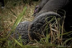 Poached elephant in Malawi Documentary Film, Hiking Boots, Documentaries, Films, Elephant, World, Nature, Walking Boots, Movies