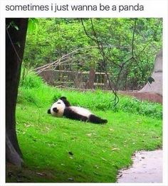 Funny pictures about Cloud Watching Panda. Oh, and cool pics about Cloud Watching Panda. Also, Cloud Watching Panda photos. Animals And Pets, Baby Animals, Funny Animals, Cute Animals, Beautiful Creatures, Animals Beautiful, Photo Panda, Panda Watch, Panda Love