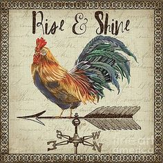 Trademark Fine Art 'Rustic Rooster Vane Canvas Art by Jean Plout, Size: 24 x 24 Rooster Art, Rooster Decor, Rooster Painting, Tole Painting, Artist Canvas, Canvas Art, Canvas Size, Chicken Art, Chicken Painting