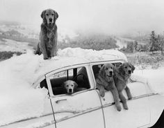 Joyful, Joyful, Joyful...as only dogs know how to be happy,  with only the autonomy of their shameless spirit.- Pablo Neruda,  Photograph- Bruce Weber