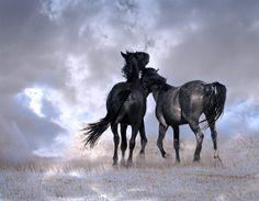 wild horse mustang
