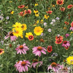 Bee-friendly wildflower seed mix