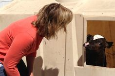 {WCCO-TV | CBS Minnesota} One of our very own dairy farm moms speaks out about how #Minnesota #dairy farmers are adjusting to a decline in #milk consumption.