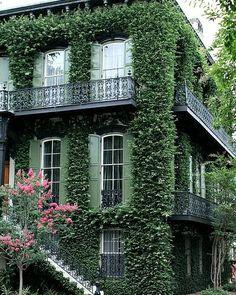 Ivy covered home Savannah, GA