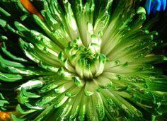 Lime Fireworks, via Flickr.