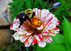 Busy as a Bee - Pixdaus (I can see a yarn speckled and streaked with these colors)