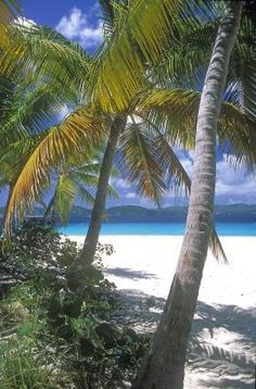 Sandy Cay, BVI Pretty Beach, Interesting Animals, Island Life, Tommy Bahama, Photo Contest, Walks, Places Ive Been, Seaside, Beaches