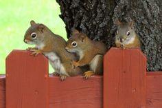 Nosy squirrels