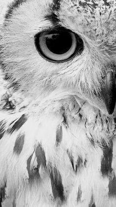 Black n white. Owl eye