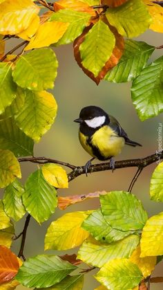 Cute Birds, Pretty Birds, Beautiful Butterflies, Beautiful Birds, Animals Beautiful, Exotic Birds, Colorful Birds, Nature Images, Nature Pictures
