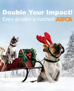 Your gift can save a life! Thanks to a generous matching gift grant, every contribution you make to the ASPCA will be doubled. Every gift helps us save animals in need, no matter the size!