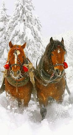 Winter two horse open sleigh. with colors of red in the deep white snow! Notice the lovely blaze & star on the horses. Beautiful pin via Lyn Wynters gives joy even in spring & summer months! Pretty Horses, Horse Love, Beautiful Horses, Animals Beautiful, Snow Scenes, Winter Scenes, Zebras, Horse Pictures, Animal Pictures