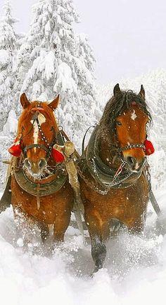 "Polska zima :) ""Winter sleigh..."""