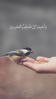 Surah Al-Baqarah ~ And do good; indeed, Allah loves the doers of good. Quran Quotes Love, Quran Quotes Inspirational, Beautiful Islamic Quotes, Allah Quotes, Beautiful Arabic Words, Best Islamic Quotes, Islamic Phrases, Muslim Quotes, Arabic Quotes