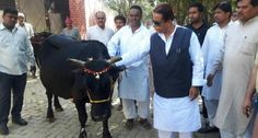 Bharat Khabar provides news in Hindi, Azam Khan return back Shankaracharya gifted cow to Mathura.