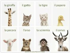 Impariamo delle parole nuove: gli animali. CoursesPrices: http://saneres.wix.com/italianonlinetutor  Serena Italian's BLOG: http://serenaitalian.wordpress.com/ FB group: https://www.facebook.com/italian.online.tutor YouTube channel: http://www.youtube.com/user/serenafantasia