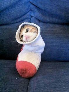 Time to stick my kitten in a sock.... She doesn't like it!!!!!