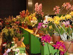 philadelphia flower show 2012 | Philadelphia Flower Show 2012 | Flickr - Photo Sharing!