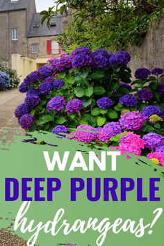 Hydrangea Colors, Hydrangea Care, Hydrangeas, Cool Garden Ideas, Garden Yard Ideas, Easy Garden, Hydrangea Landscaping, Mulch Landscaping, Landscaping Design