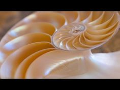 The Innovators Using Nature's Design Principles to Create Green Tech - YouTube