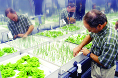 Vegetable Gardening For Beginners Hydroponic Gardening Systems for Beginners - Grow Hydroponic Vegetables this maybe the way to go for allergy sufferers Hydroponic Vegetables, Hydroponic Farming, Hydroponic Growing, Hydroponic Gardening, Growing Plants, Organic Gardening, Vegetable Gardening, Indoor Gardening, Organic Hydroponics
