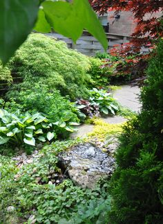 Adjacent to the seating area is the garden's water feature. Water bubbles up from a low flat stone and adds the relaxing sound of splashing water as it flows into a reservoir below. Three Dogs in a Garden
