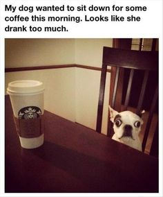 Attack Of The Funny Animals – 36 Pics