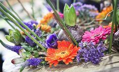 fotobueno_mtp_gardenia_22-02-2013-22-g.jpg (660×400)