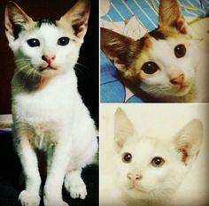 Triple threat #cats #love #instagood #photooftheday #beautiful #cute #happy #fashion #followme #me #follow