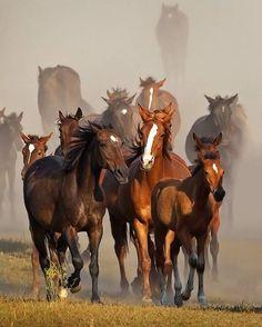 Did someone say LUNCH? #SaddlesForSale #Horses #MySaddleTrader | MySaddleTrader.com