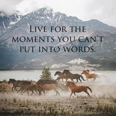 Try to put it into words. Find the most perfect words - one or one thousand - to describe those breathtaking moments. Then you live them three times, and others get to live it too. Inspirational Horse Quotes, Cowboy Quotes, Cowgirl Quote, Rodeo Quotes, Hunting Quotes, Horse Riding Quotes, Wild Horses Quotes, Horse Sayings, Equestrian Quotes