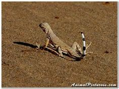 lizards - Yahoo Canada Image Search Results