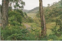 Bosque andino colombiano antioquia - Colombia - community action for sustainability - CASwiki Ecuador, Peru, Panama, Latin America, Sustainability, Community, Plants, Action, Venezuela