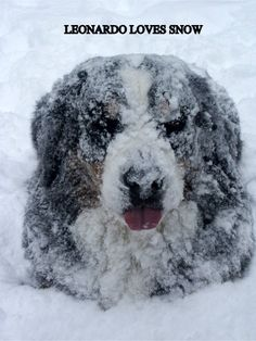 Dogs have SO much fun in the snow!