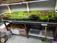 Aquatic plant display 200x45x35