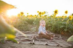 Prayers From Maria Sunflowers