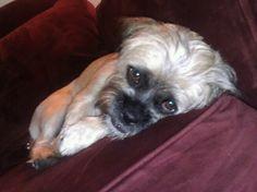 Saddest dog in the world