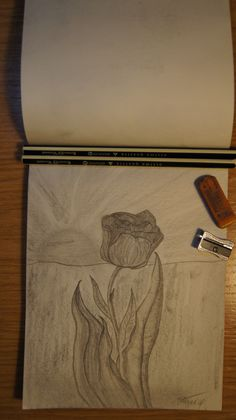 цветок ... тюльпан