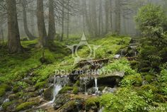http://www.dollarphotoclub.com/stock-photo/creek in wild wet Carpathian forest/32653163 Dollar Photo Club millions of stock images for $1 each
