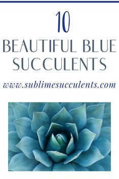 Here are some beautiful blue succulents that will surely make a great addition to your indoor or outdoor gardens. These are also perfect for adding a hint of blue to your fairy gardens, living walls, and centerpieces. Flowering Succulents, Colorful Succulents, Growing Succulents, Cacti And Succulents, Cacti Garden, Cactus Plants, Succulent Planter Diy, Succulent Care, Succulent Arrangements
