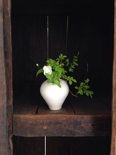Naoki Sasaki experimental ikebana (May 2014) - Florist House, Nagoya, Shinichi Ogawa & Associates