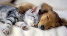 katter og hunder | katt og hund