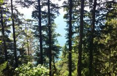 Trees and ocean on the North Oregon Coast